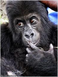 monkey 21576_normal